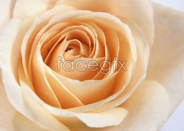 Flowers close-ups of 159