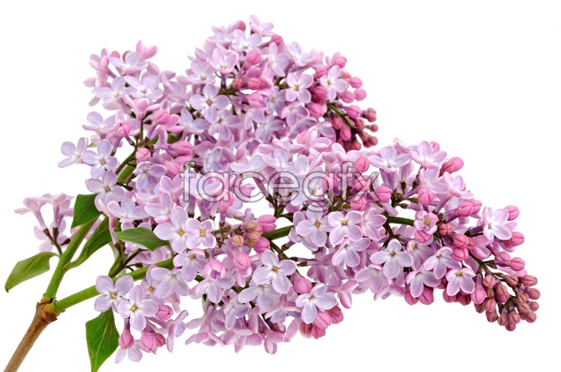 Pink flower picture material