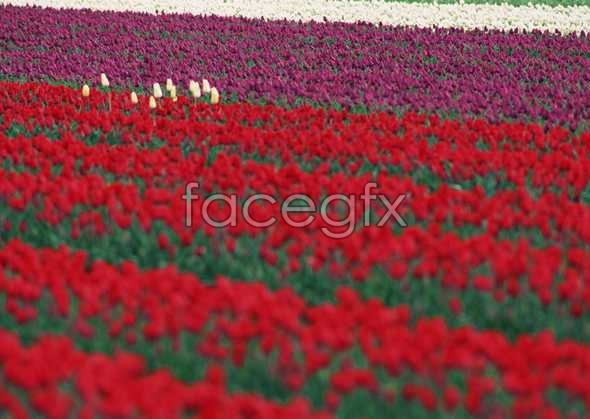 Thousands of flowers 532