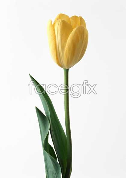 Flowers close-up 1345
