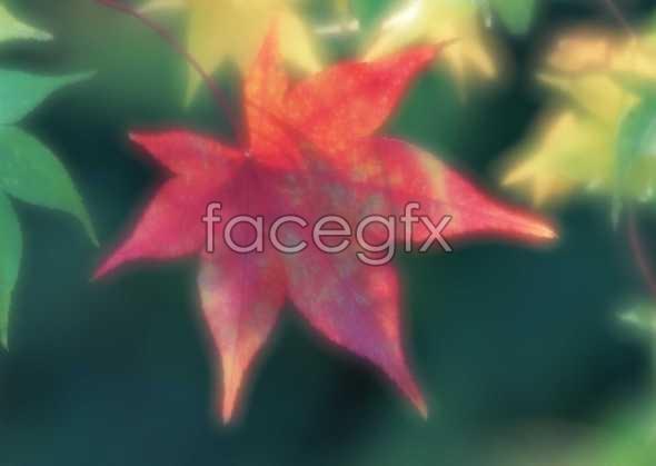 Flowers close-up 1613