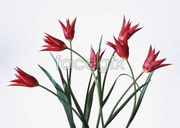 Flowers close-up 1624