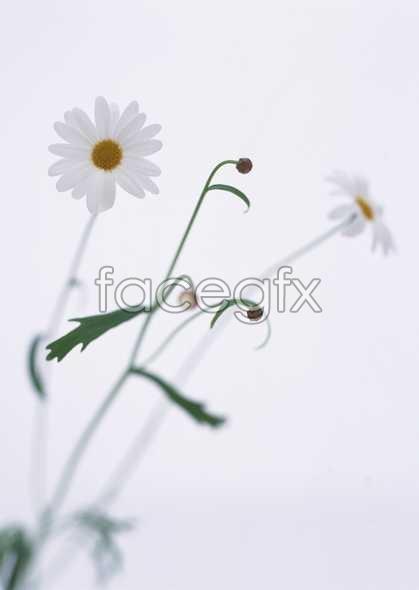 Flowers close-up 1686