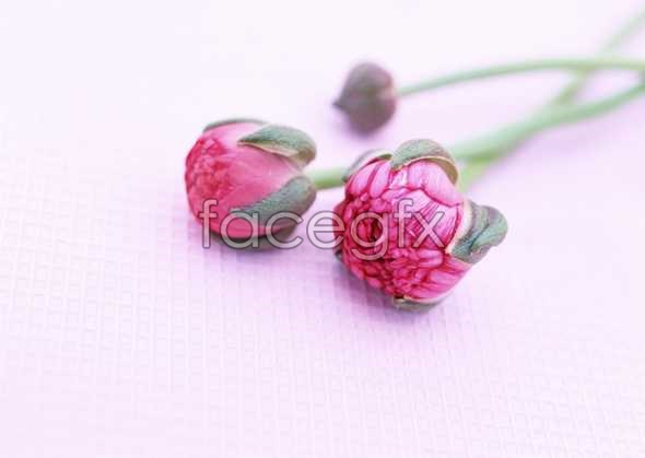 Flowers close-up 1722