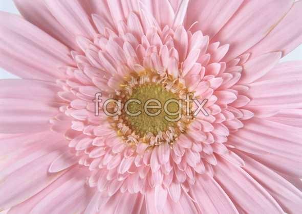 Flowers close-up 179