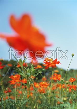 Flowers close-up 2,092
