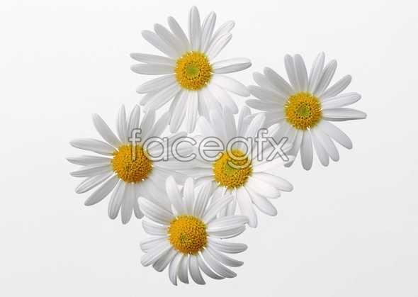 Flowers close-up 423