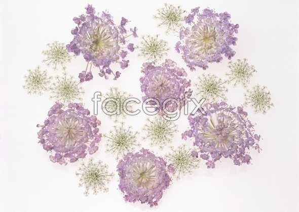 Flowers close-ups 1050