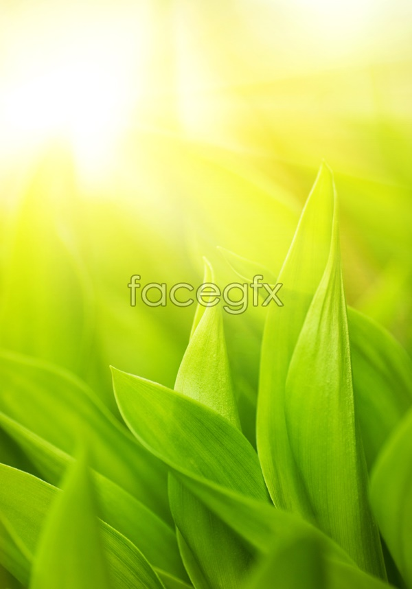 Green leaf picture