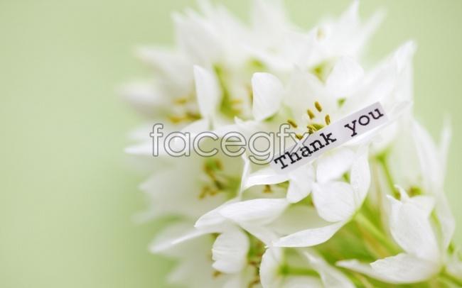 Thanksgiving, white flowers