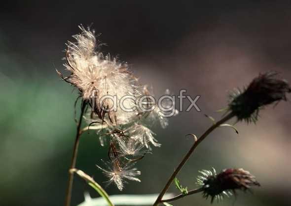 Flowers close-up 1182