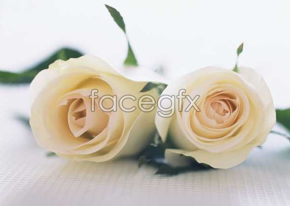Flowers close-up 1749