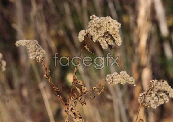 Flowers close-up 3