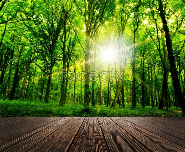 Fresh forest beauty pictures