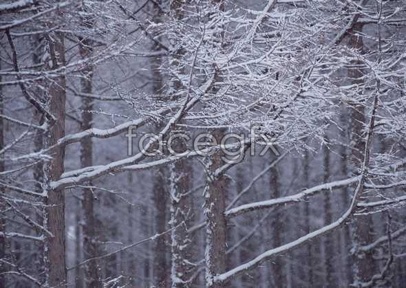Ice 452