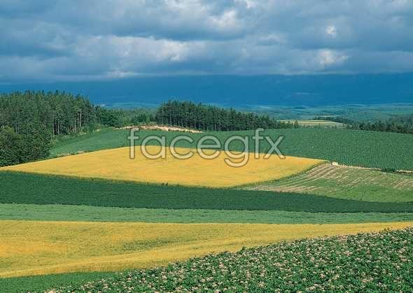 Idyllic rural 15