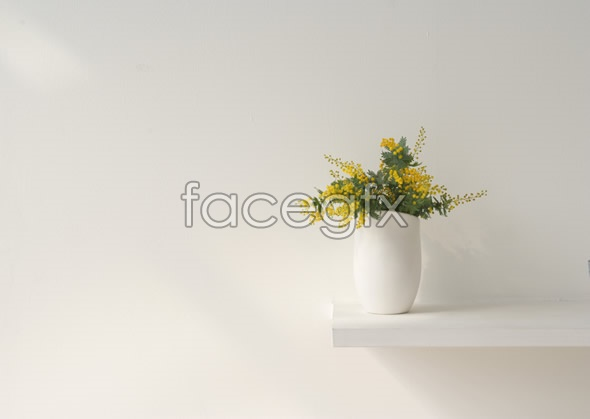 Indoor flower 32
