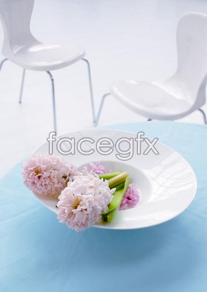 Indoor flower 9