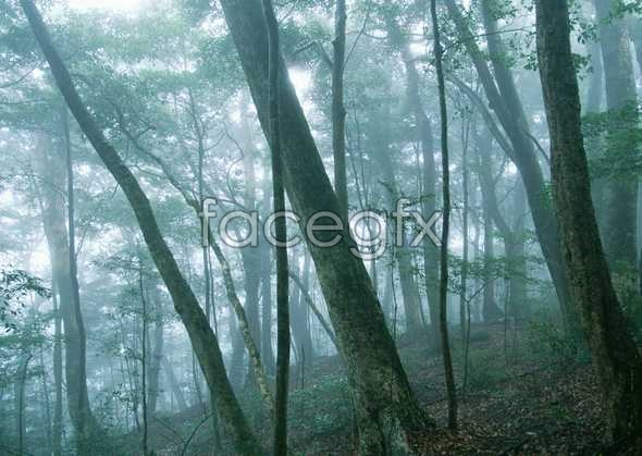 Jungle beauty of 155