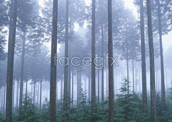 Jungle beauty of 429