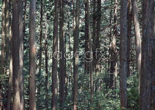 Jungle beauty of 532