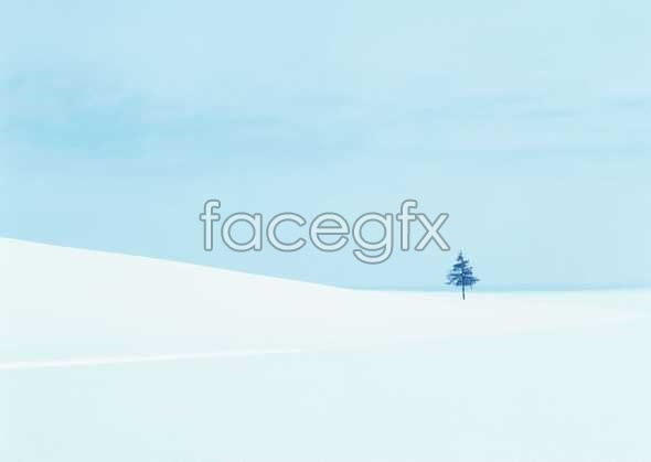 Snow 303