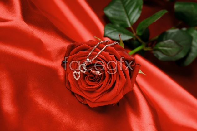 Valentine's Day Roses picture