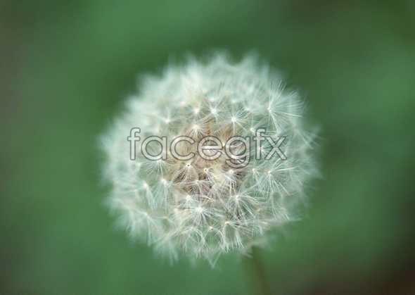 Flowers close-up 1184