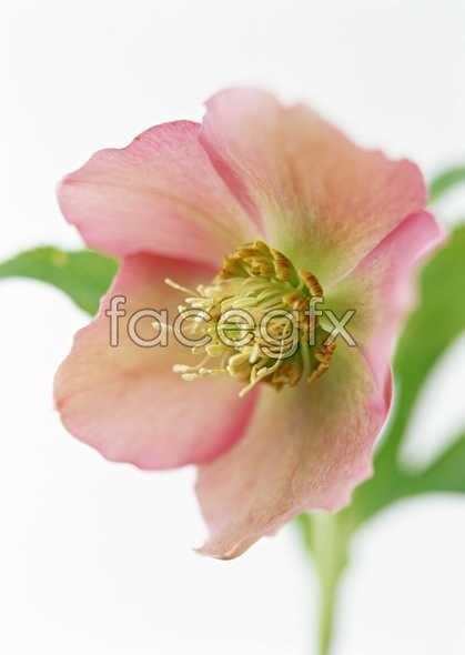 Flowers close-up 1396