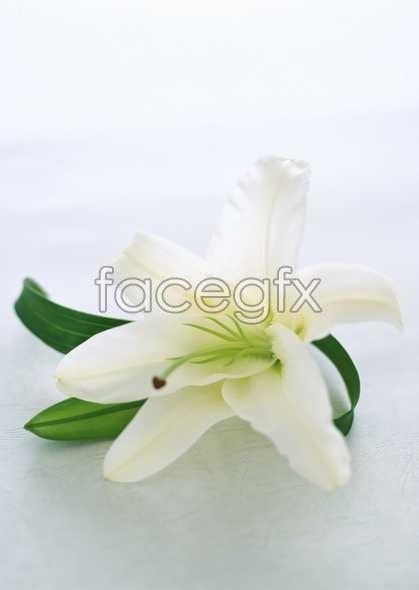 Flowers close-up 1678