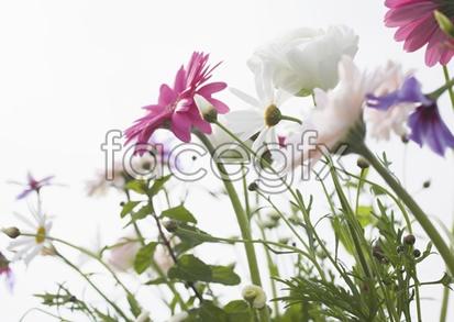 Flowers close-up 2,054