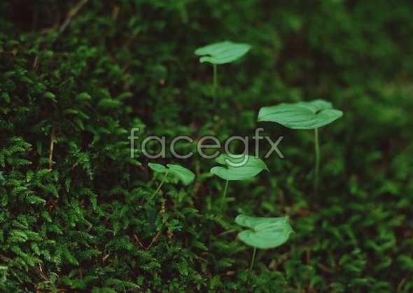 Flowers close-up 872