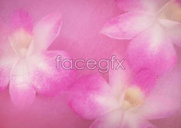 Flowers close-up 882