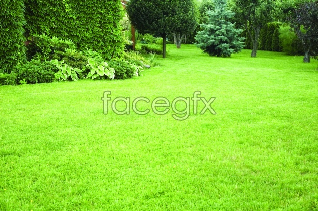 Green green grass picture