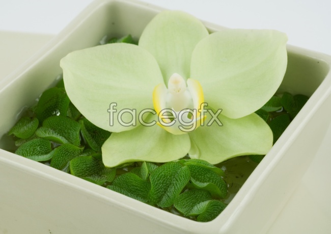 Green leaf petals of white flowers pictures