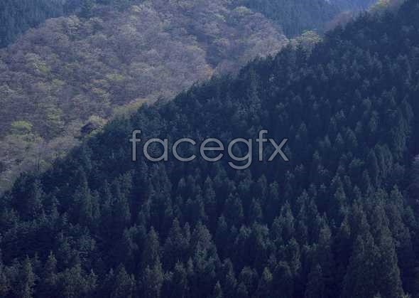 Jungle beauty of 499