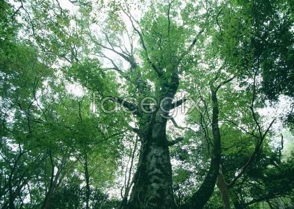 Jungle beauty of 99
