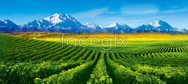 Tea garden views material picture