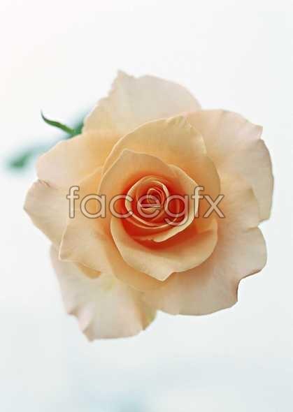 Flowers close-up 1430