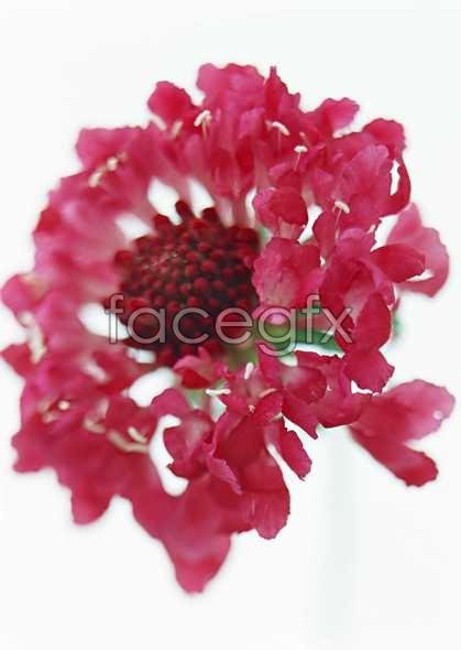 Flowers close-up 1457