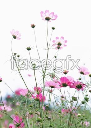 Flowers close-up 2,062