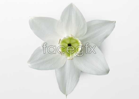 Flowers close-up 463