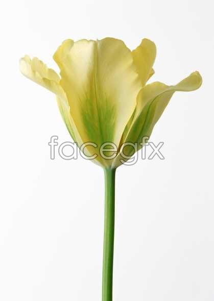 Flowers close-up 505