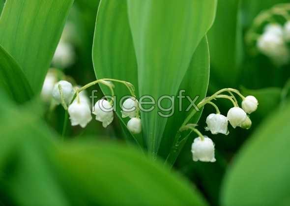 Flowers close-up 601