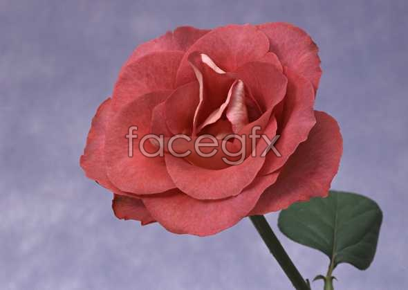 Flowers close-up 972