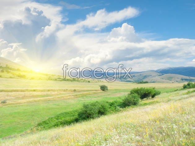 HD picture vast wheat fields