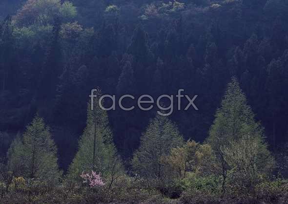 Jungle beauty of 497