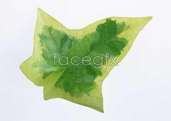 Polygon leaves