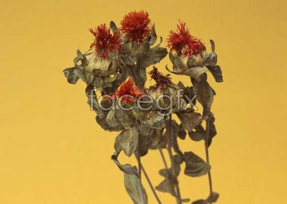 Flowers close-up 1064