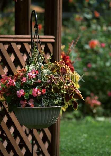 Flowers close-up 1245